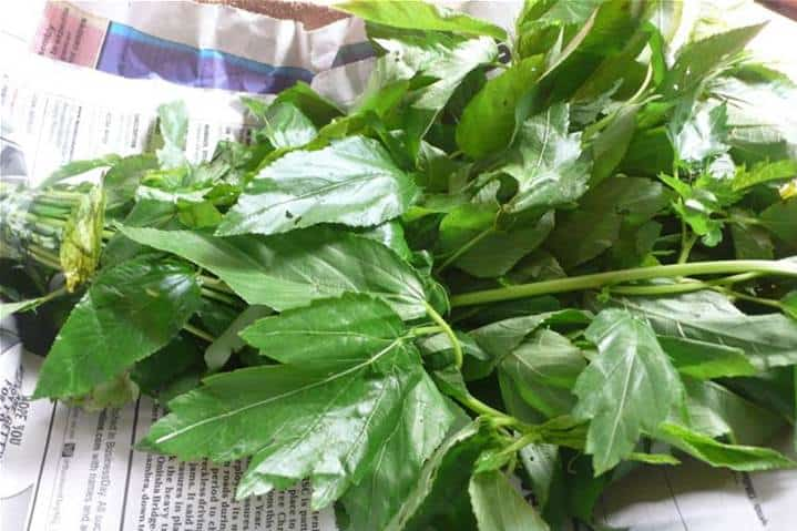 Health Benefits Of Ewedu leafs